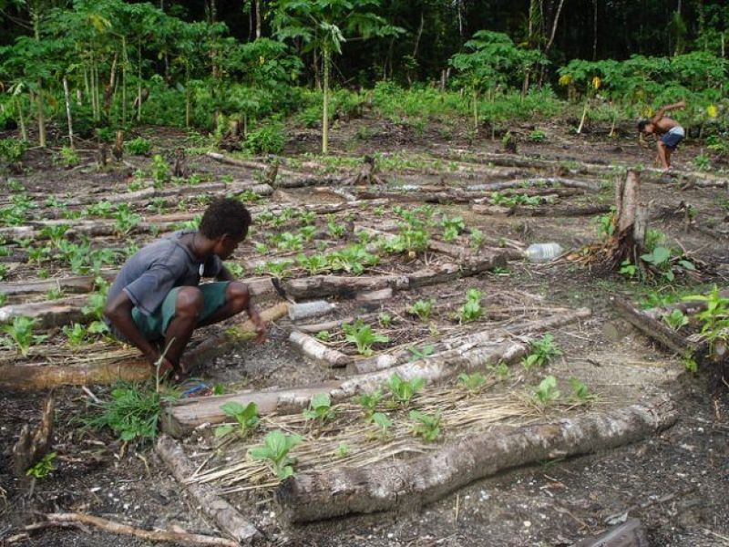 soil-degradation-climate-change-heavy-tropical-monsoonal-rain-and-pests-are-some-of-the-challenges-young-farmers-face-b938e64a44e05d6564d28bbe9e38697a1631699417.jpg
