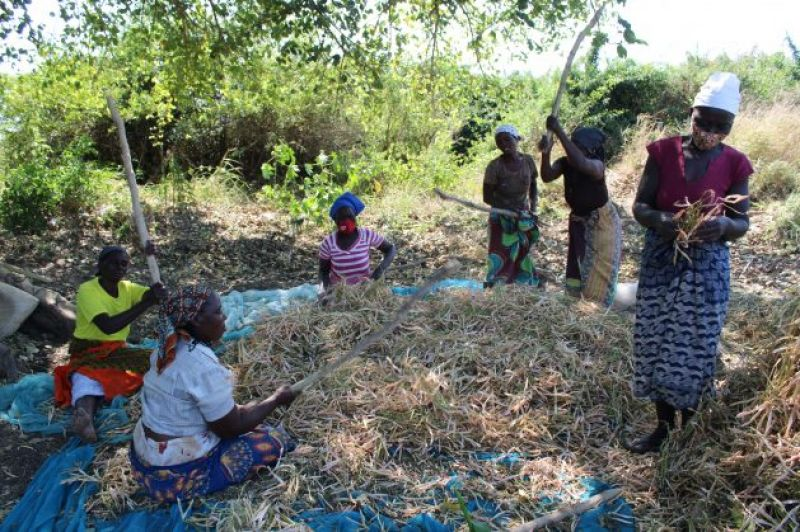 women-produce-more-than-50-percent-of-the-food-in-the-world-but-are-disadvantaged-when-it-comes-to-access-to-resources-such-as-land-and-financial-services-defdd97394e549763ce1729e6fb427881631951248.jpg
