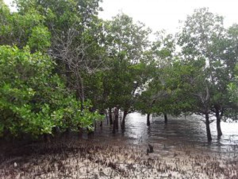 mangrove-blue-carbon-could-bolster-climate-change-adaptation-mitigation-and-resilience-efforts-experts-say-f1a558e6d22081f5dfdb5bdb517b02001633676160.jpg
